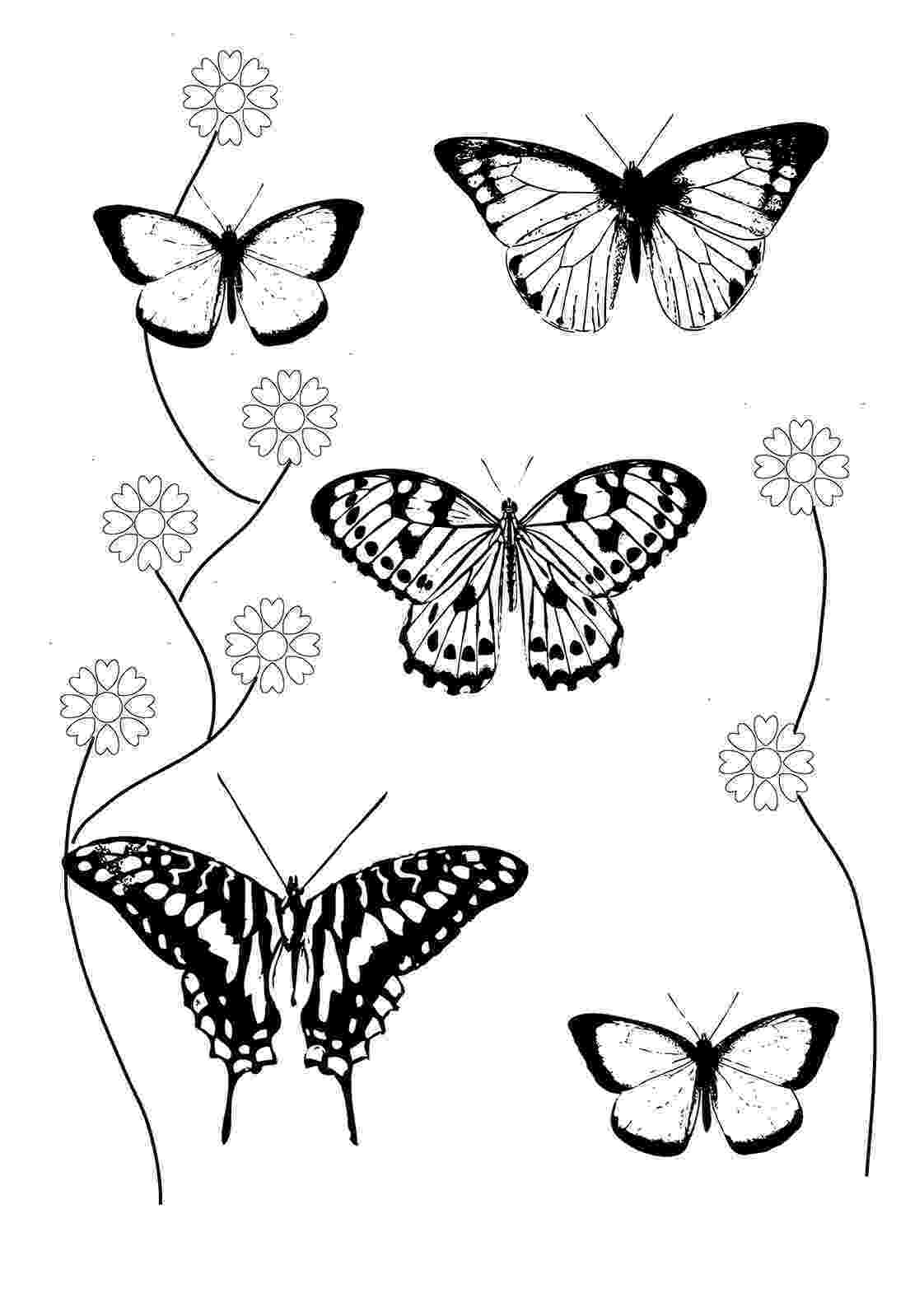 coloring pages of butterflies and flowers 75 best images about butterfly coloring pages on pinterest flowers of pages butterflies and coloring