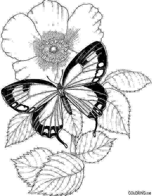 coloring pages of butterflies and flowers butterfly and spring flowers 3 coloring pages animal etsy butterflies and pages flowers of coloring