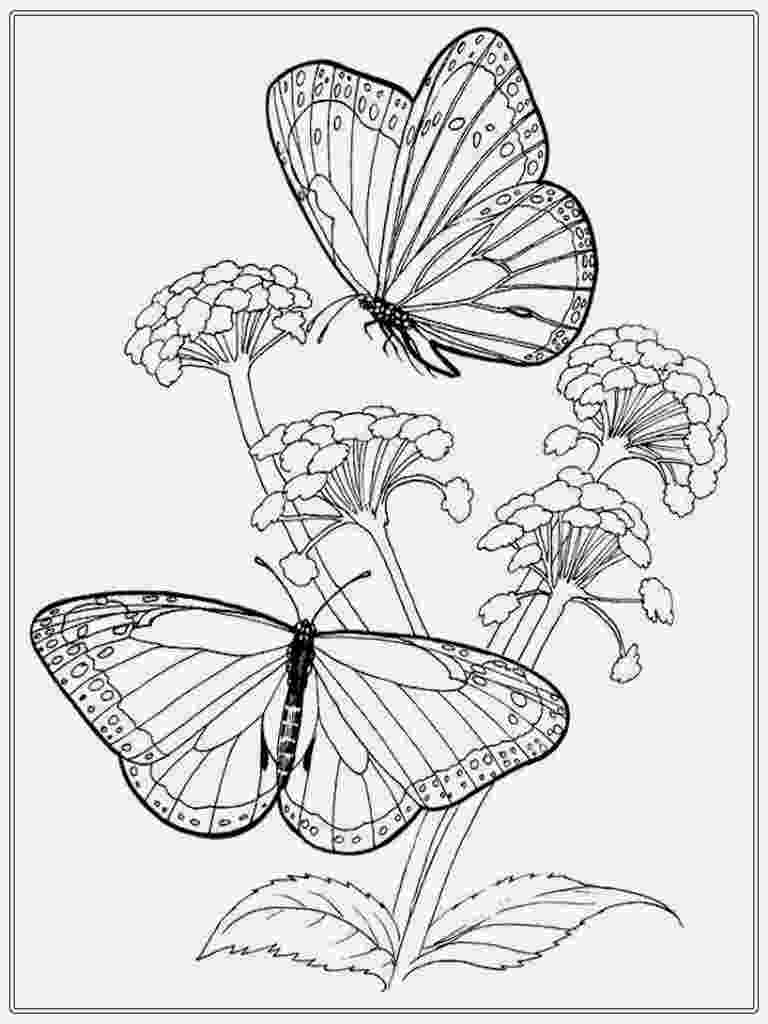 coloring pages of butterflies and flowers butterfly coloring pages flowers and butterflies of pages coloring