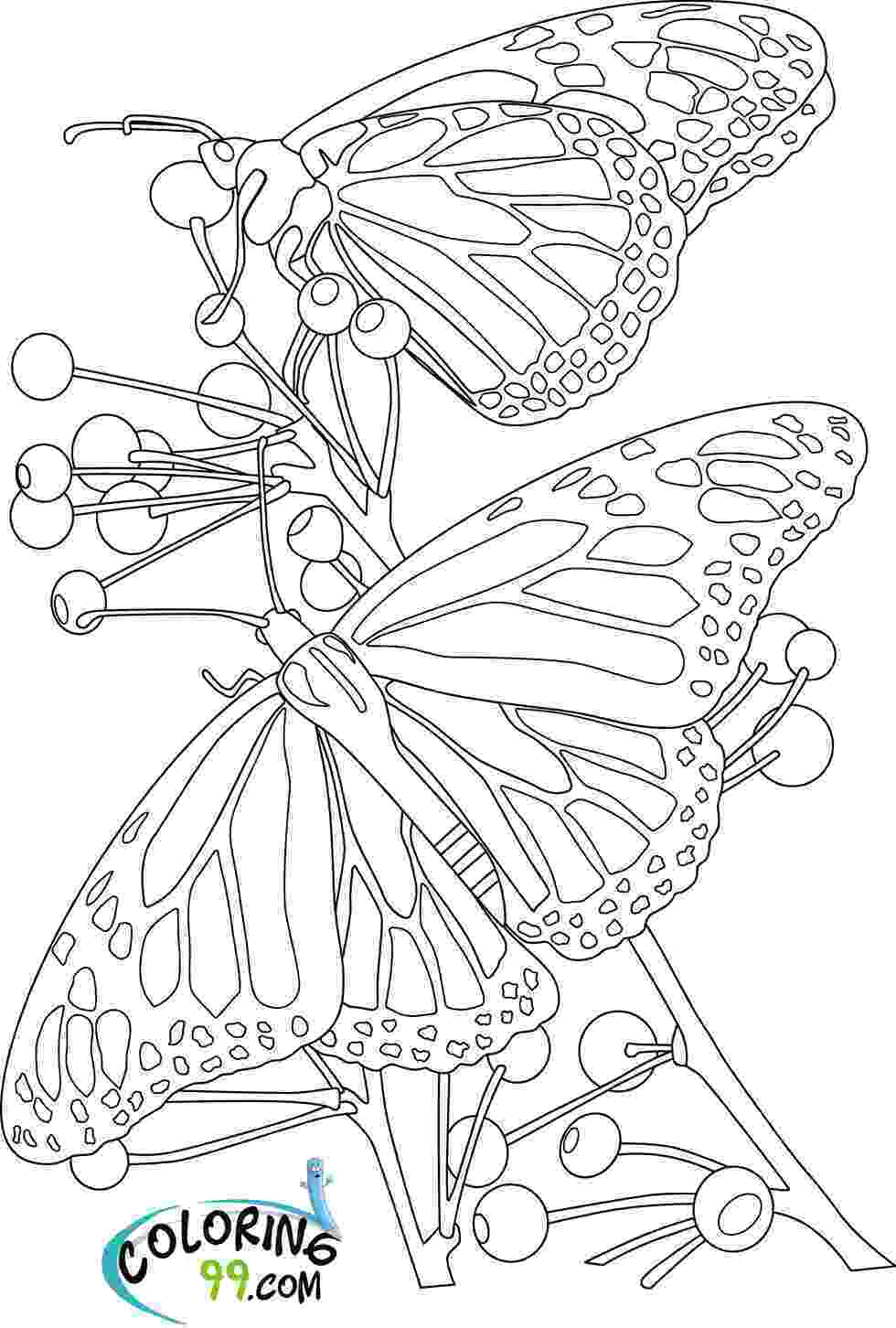 coloring pages of butterflies and flowers butterfly coloring pages team colors and butterflies of flowers pages coloring