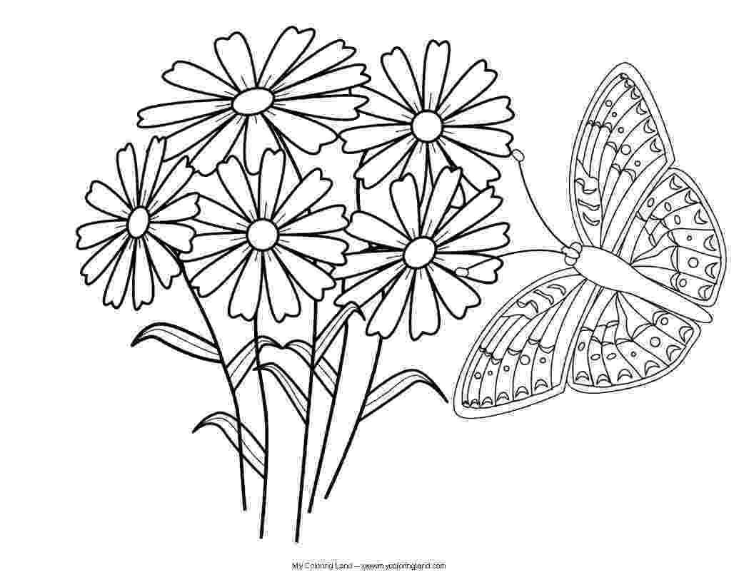 coloring pages of butterflies and flowers butterfly my coloring land and butterflies coloring pages flowers of