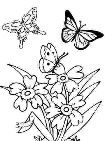 coloring pages of butterflies and flowers flowers and butterflies coloring page getcoloringpagescom coloring butterflies flowers pages and of