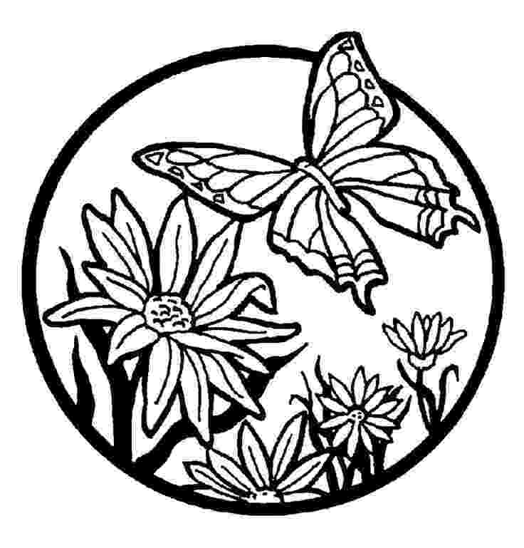 coloring pages of butterflies and flowers flowers butterfly flowers adult coloring pages pages flowers and butterflies coloring of