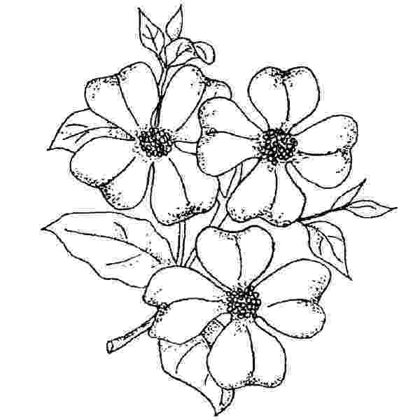 coloring pages of dogwood flowers dogwood blossom drawing at getdrawingscom free for flowers coloring pages of dogwood