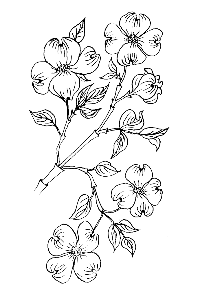 coloring pages of dogwood flowers dogwood flower coloring page purple kitty coloring of dogwood flowers pages