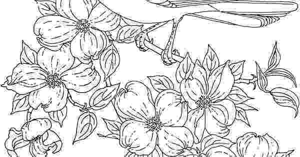 coloring pages of dogwood flowers flower page printable coloring sheets bird and of coloring flowers dogwood pages
