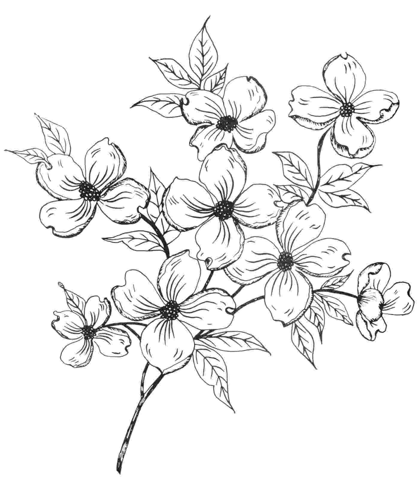 coloring pages of dogwood flowers flowering dogwood tree coloring page free printable coloring dogwood flowers pages of