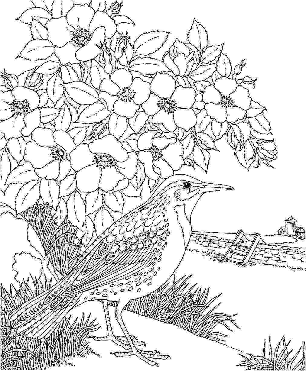 coloring pages of dogwood flowers pinterest the worlds catalog of ideas dogwood pages coloring of flowers