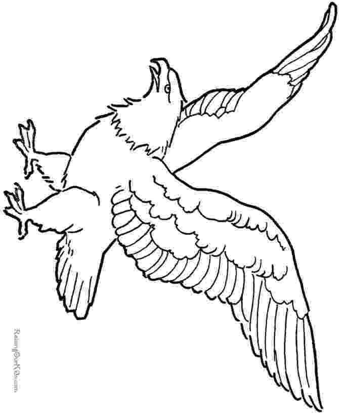 coloring pages of eagles 21 best eagle coloring pages images on pinterest of pages coloring eagles