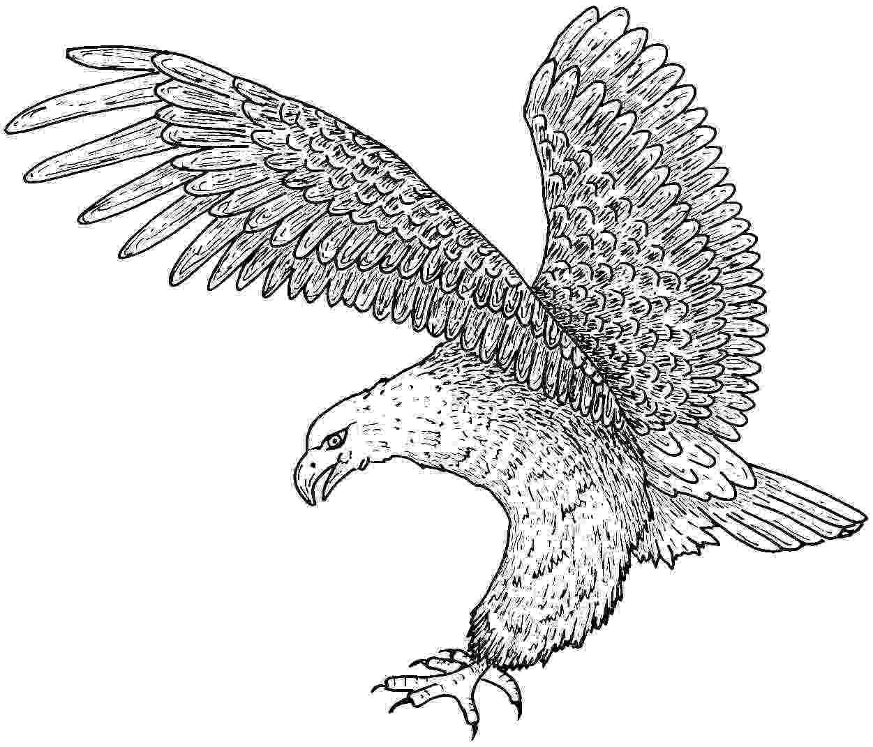 coloring pages of eagles free printable eagle coloring pages for kids eagles pages coloring of
