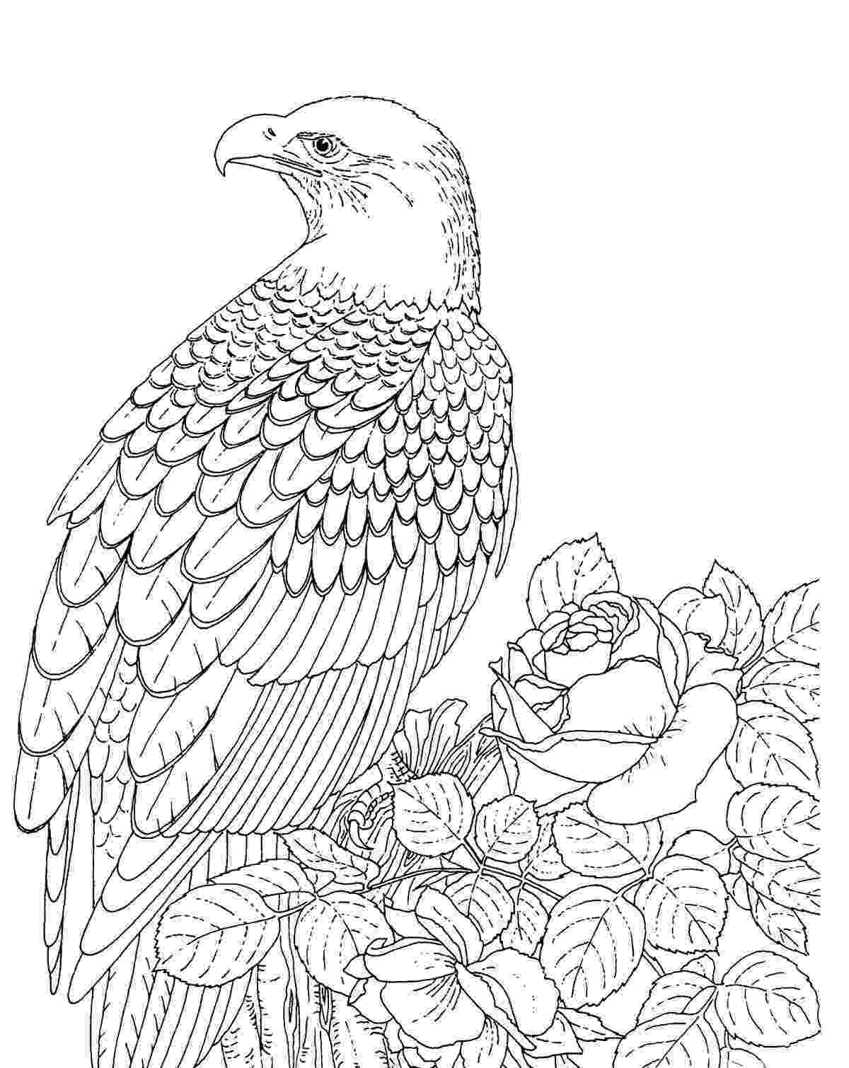 coloring pages of eagles free printable eagle coloring pages for kids pages eagles of coloring
