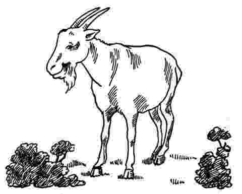 coloring pages of goats coloring pages farm animals cute goat stock vector goats coloring of pages