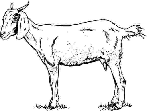 coloring pages of goats goat coloring pages coloring pages to download and print of pages coloring goats