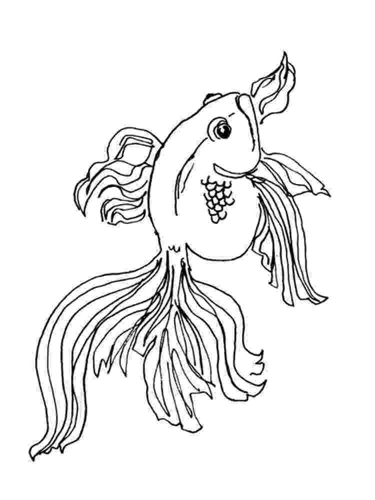 coloring pages of goldfish coloring pages of goldfish pages coloring of goldfish