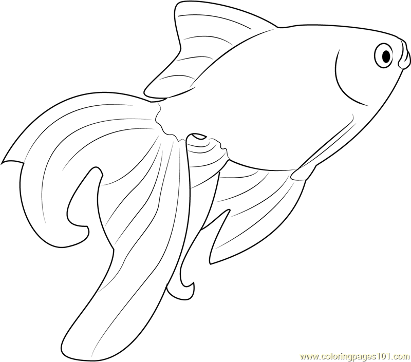 coloring pages of goldfish goldfish coloring pages minister coloring coloring of goldfish pages