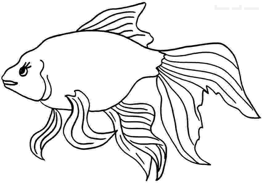 coloring pages of goldfish printable goldfish coloring pages for kids cool2bkids coloring goldfish pages of