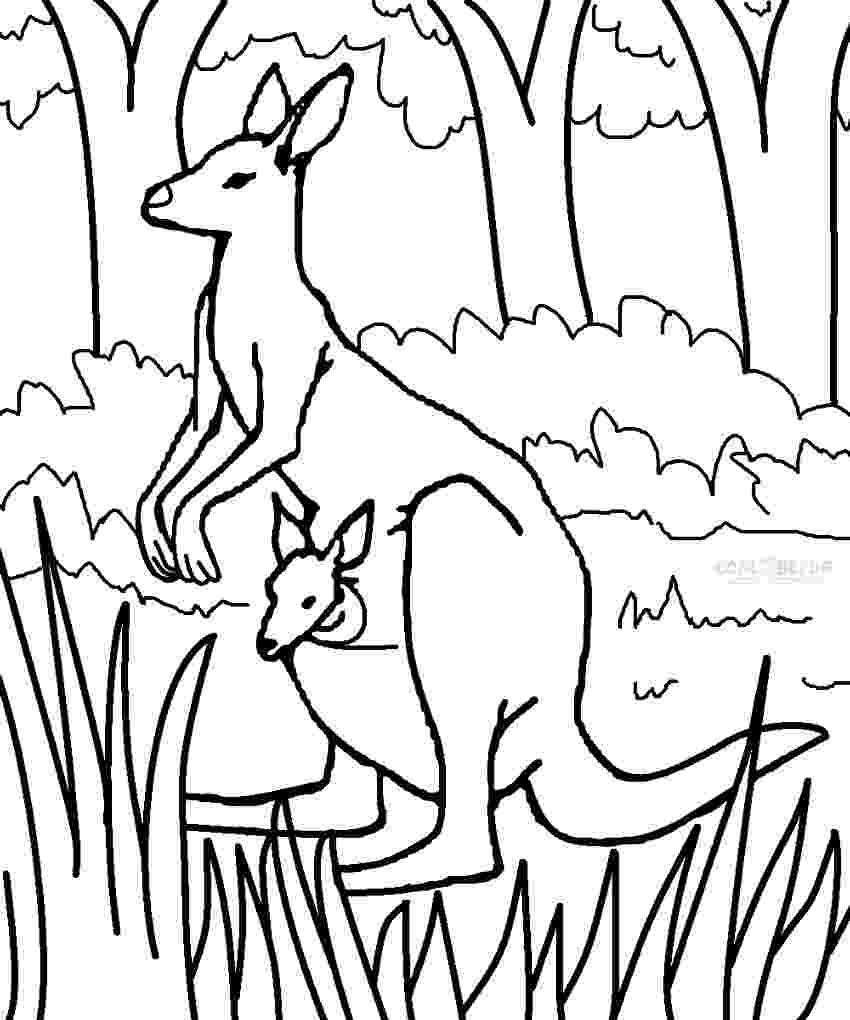 coloring pages of kangaroos free kangaroo coloring pages pages of kangaroos coloring