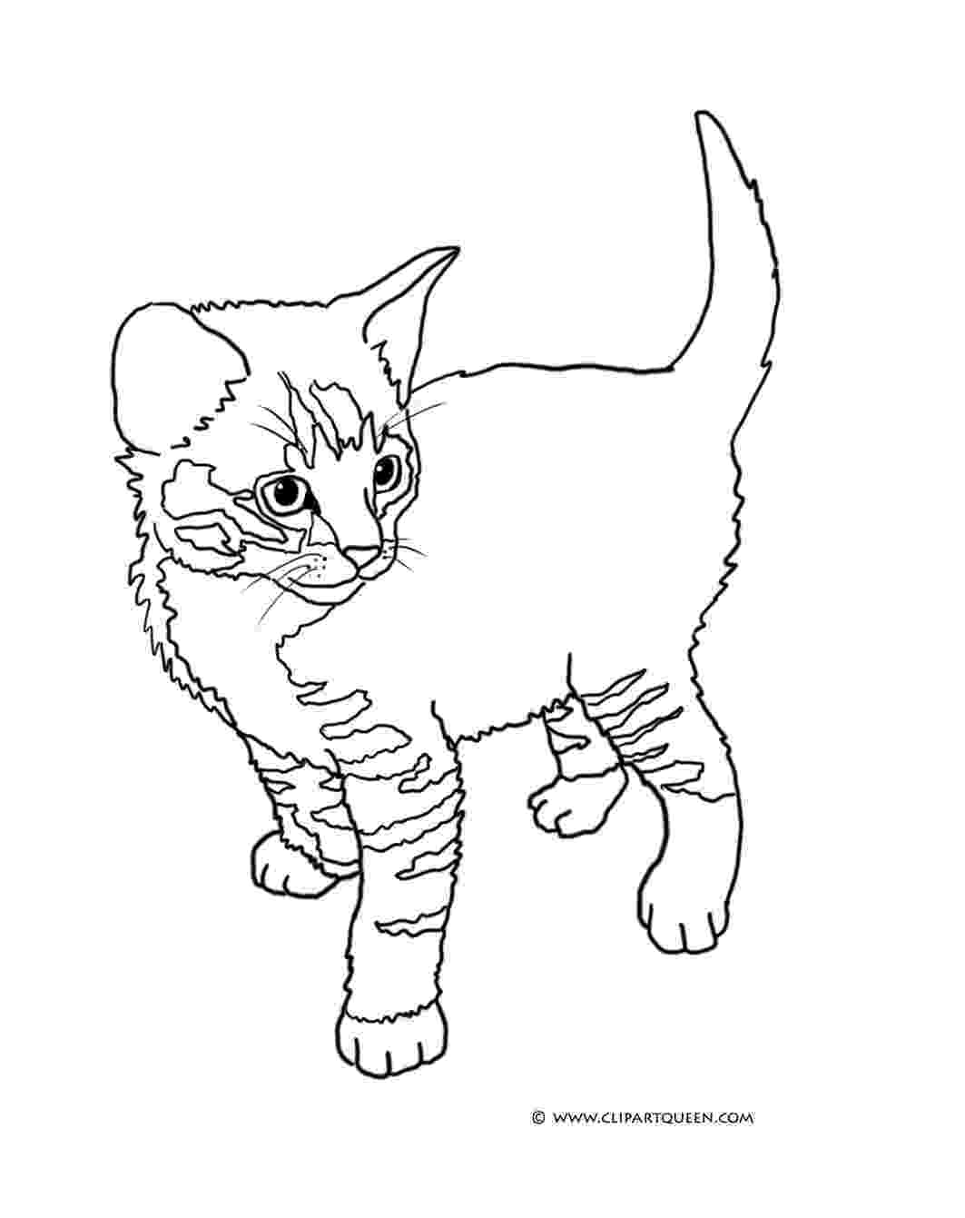 coloring pages of kittens to print free printable cat coloring pages for kids coloring to pages kittens print of