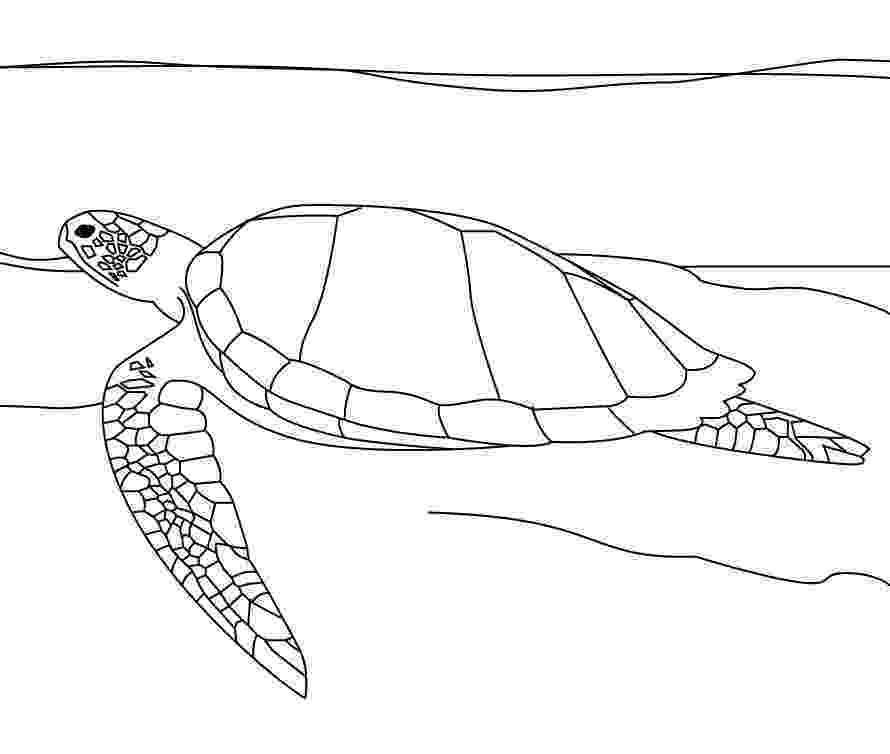 coloring pages of sea turtles free printable sea turtle coloring pages for kids coloring of turtles sea pages