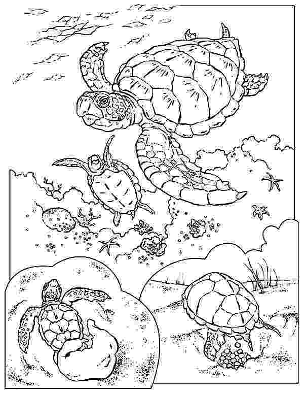 coloring pages of sea turtles kpm doodles coloring page sea turtle of coloring turtles pages sea