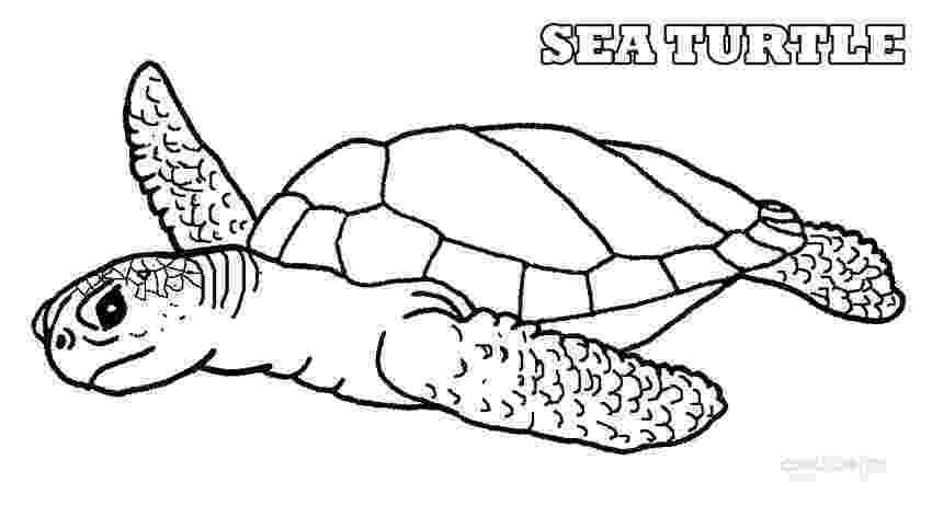 coloring pages of sea turtles sea turtle line drawing at getdrawingscom free for turtles sea coloring pages of