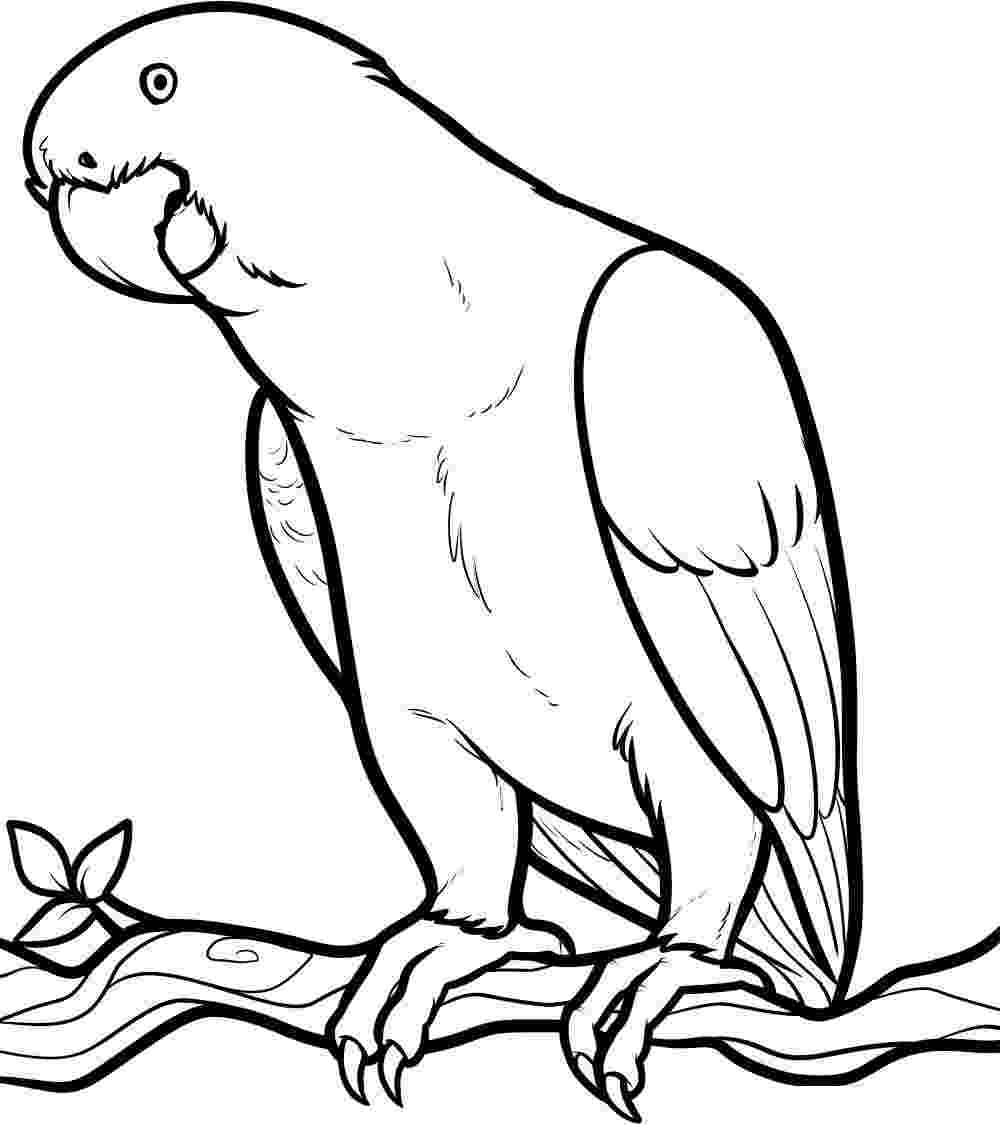 coloring pages parrot free printable parrot coloring pages for kids parrot coloring pages