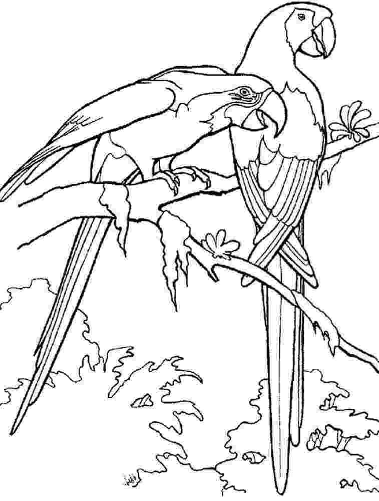 coloring pages parrot parrot coloring pages download and print parrot coloring coloring parrot pages