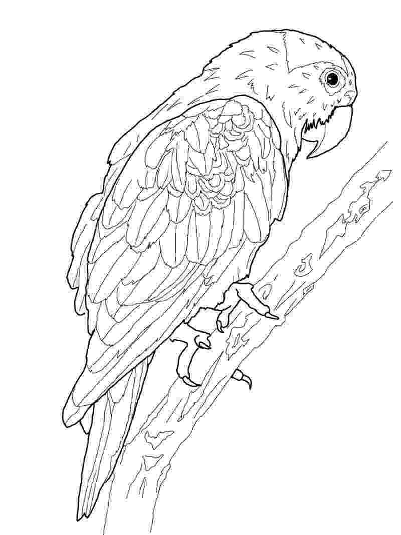 coloring pages parrot parrot coloring pages getcoloringpagescom parrot coloring pages