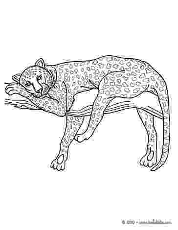 coloring pictures of panthers african panther coloring pages hellokidscom of panthers pictures coloring