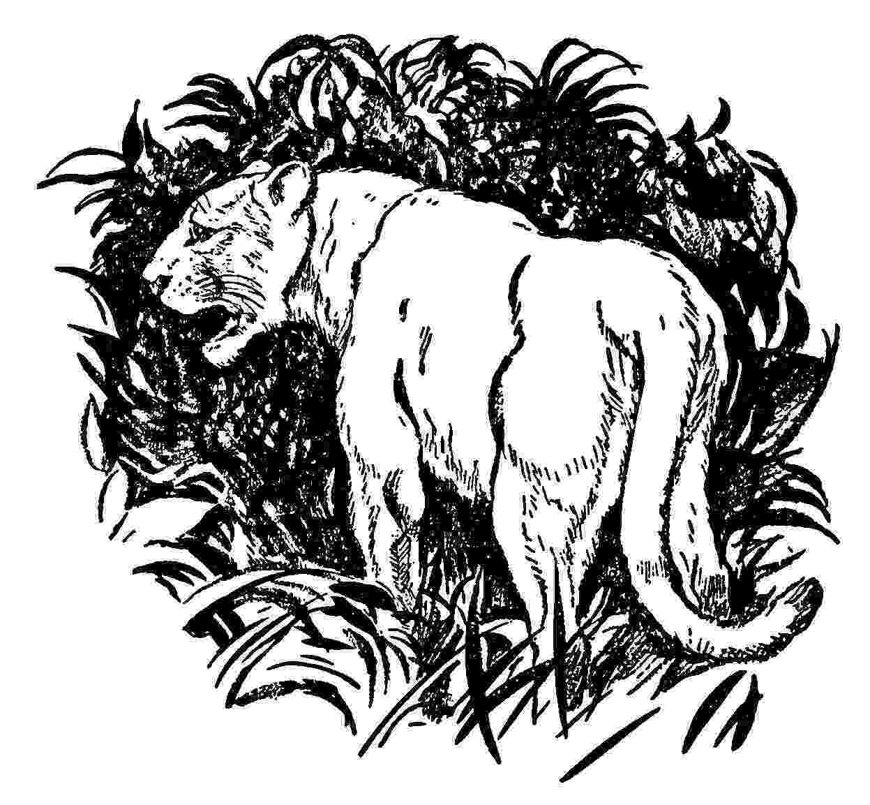 coloring pictures of panthers big cat coloring pages of coloring panthers pictures