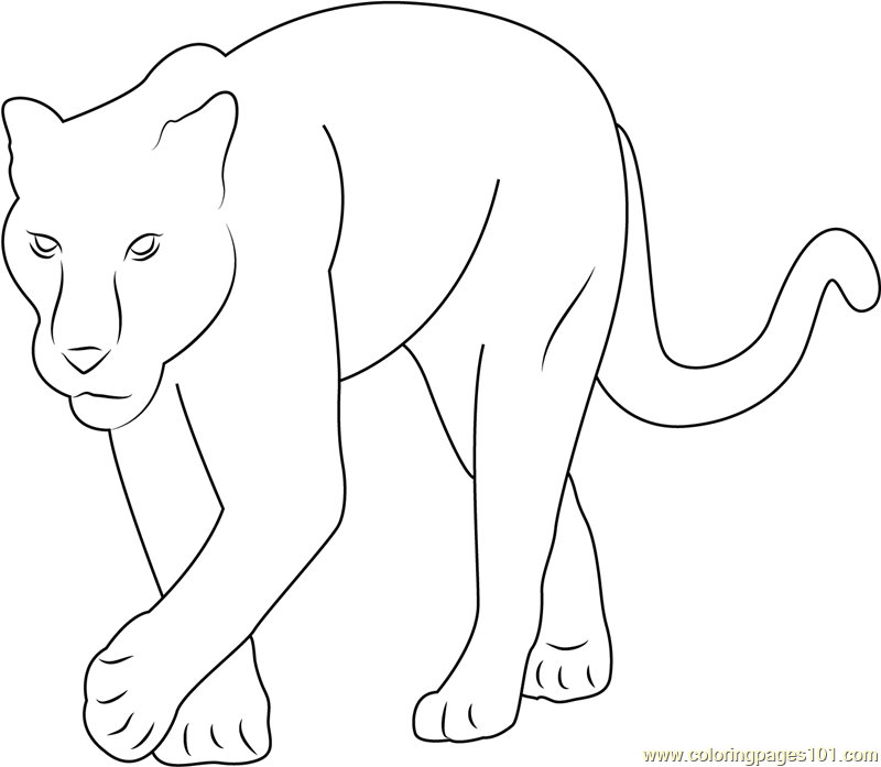 coloring pictures of panthers black panther coloring pages best coloring pages for kids of pictures panthers coloring