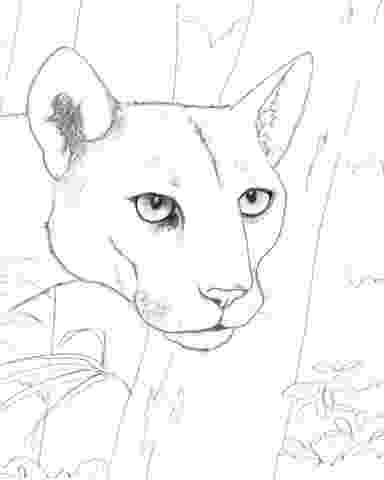 coloring pictures of panthers florida panther paper mache pinterest the o39jays pictures panthers of coloring