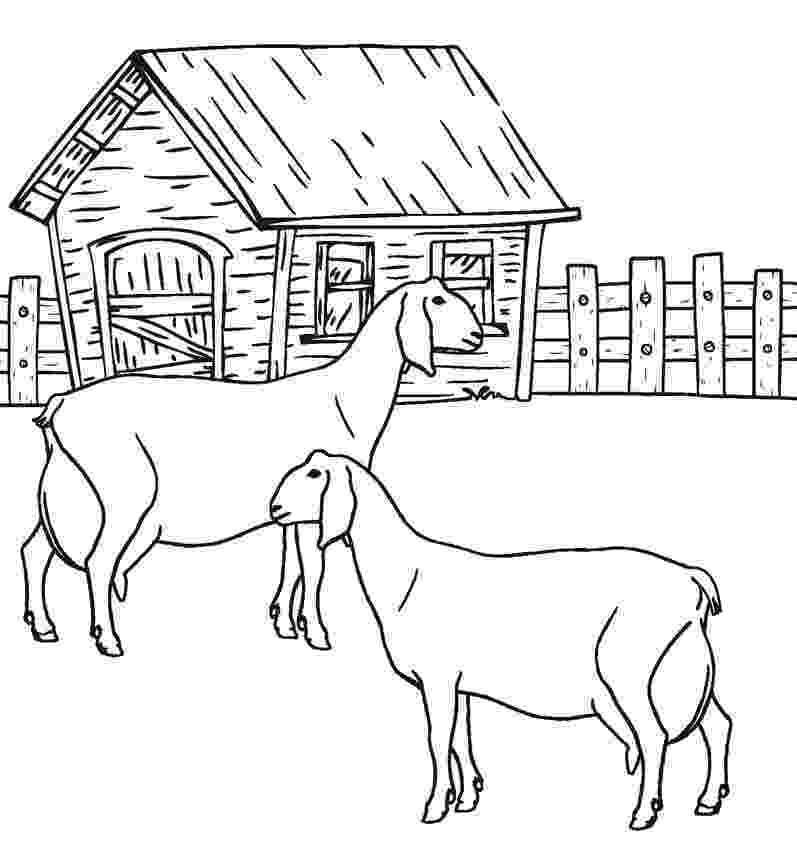 colouring farm animals farm animal coloring pages 360coloringpages farm animals colouring