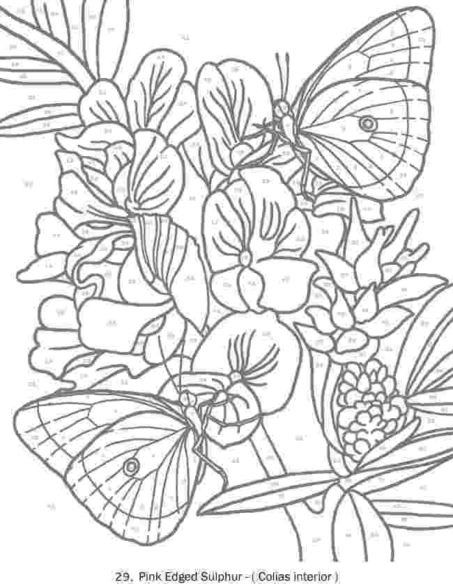 colouring for adults by numbers advanced color by number coloring pages coloring pages colouring adults for numbers by