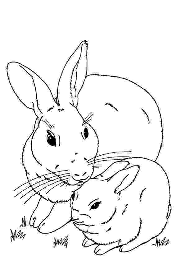 colouring page rabbit printable rabbit coloring pages for kids cool2bkids colouring rabbit page