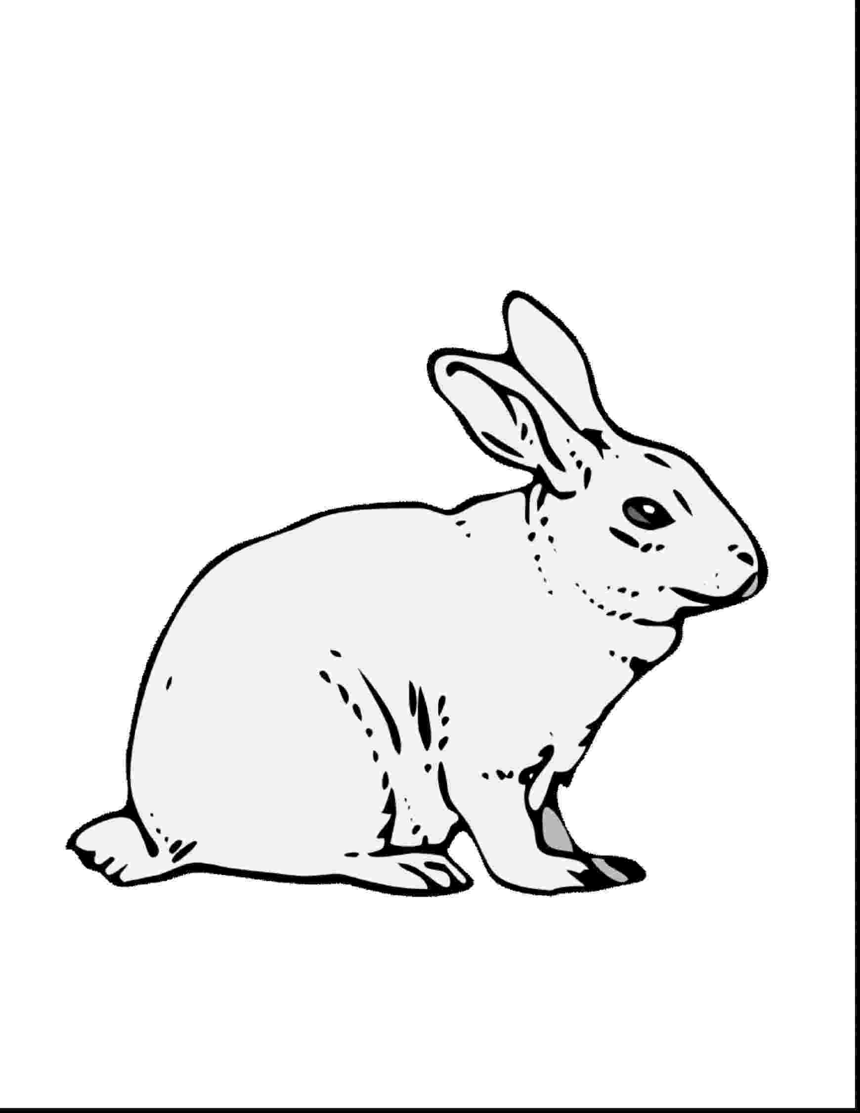 colouring page rabbit the best free rabbit drawing images download from 2722 colouring rabbit page