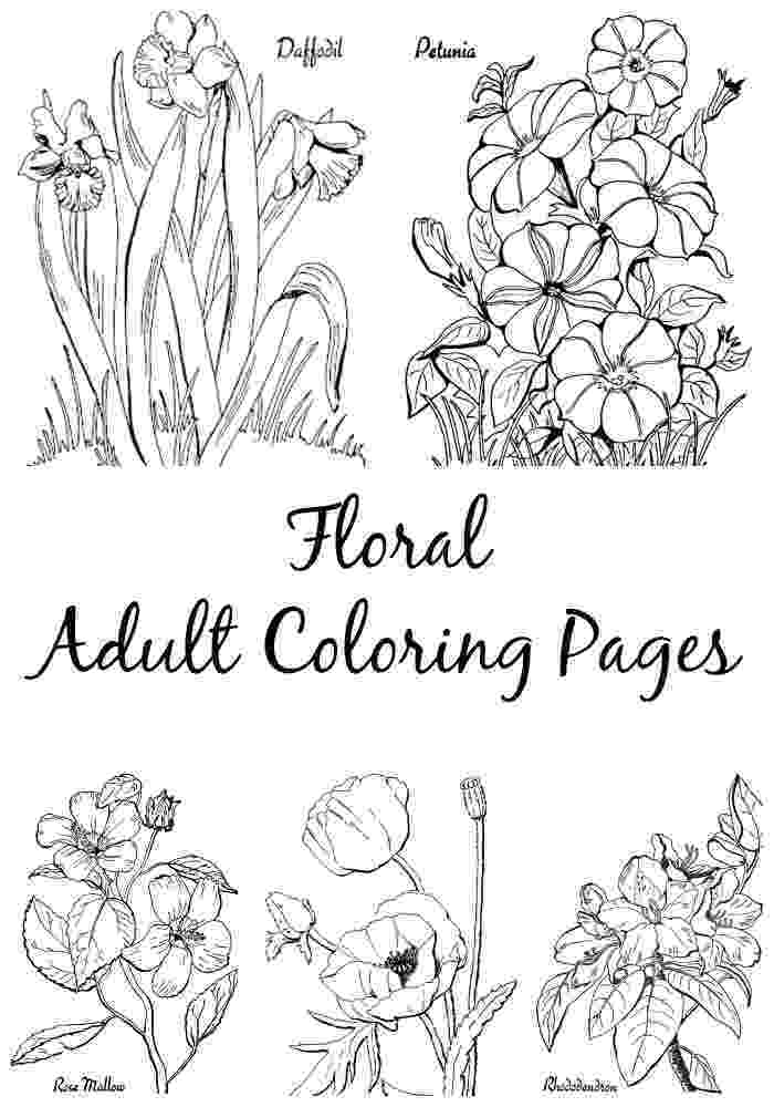 colouring pages for adults print 10 floral adult coloring pages the graphics fairy print adults for colouring pages