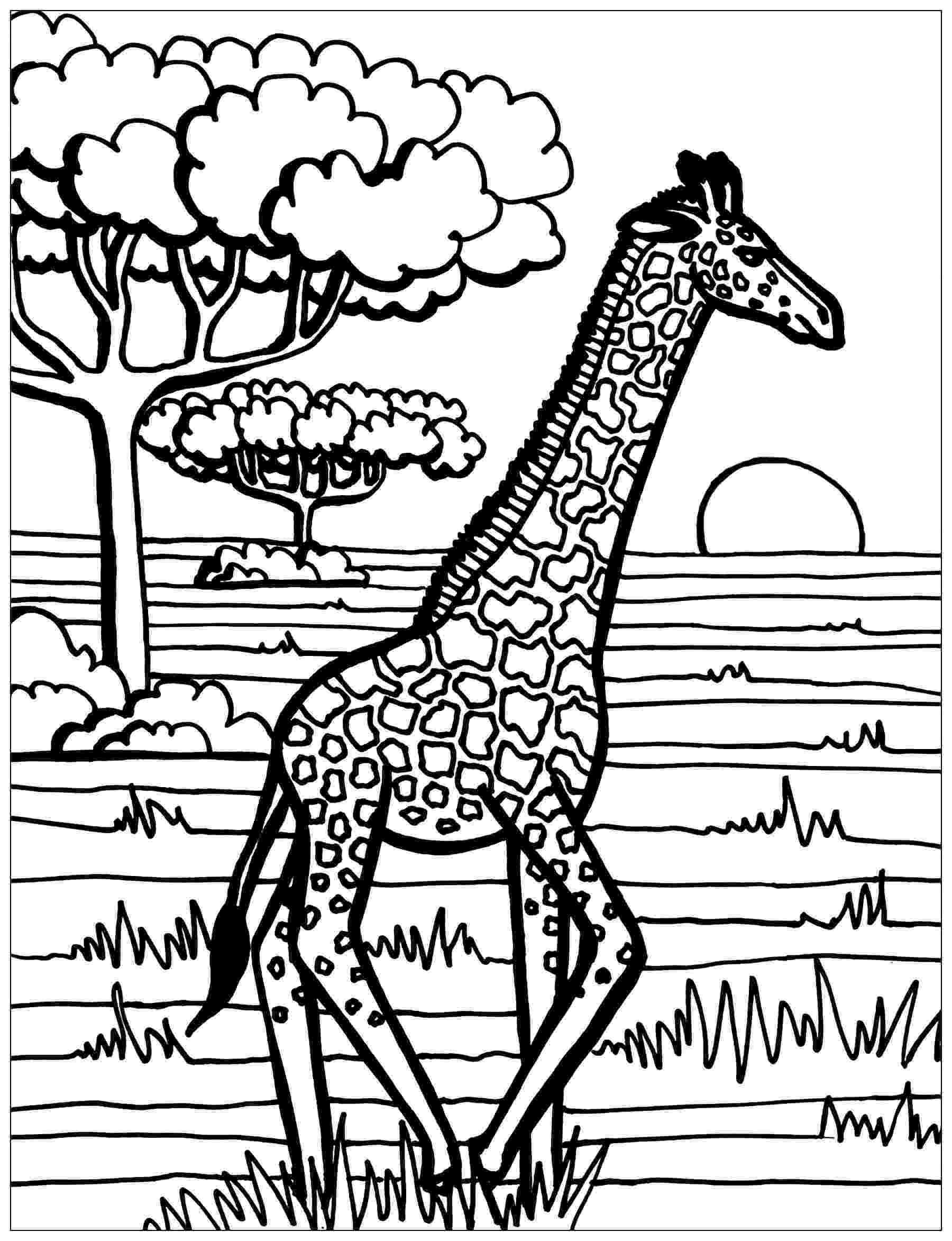 colouring pages for giraffe giraffe coloring page giraffes adult coloring pages pages giraffe for colouring