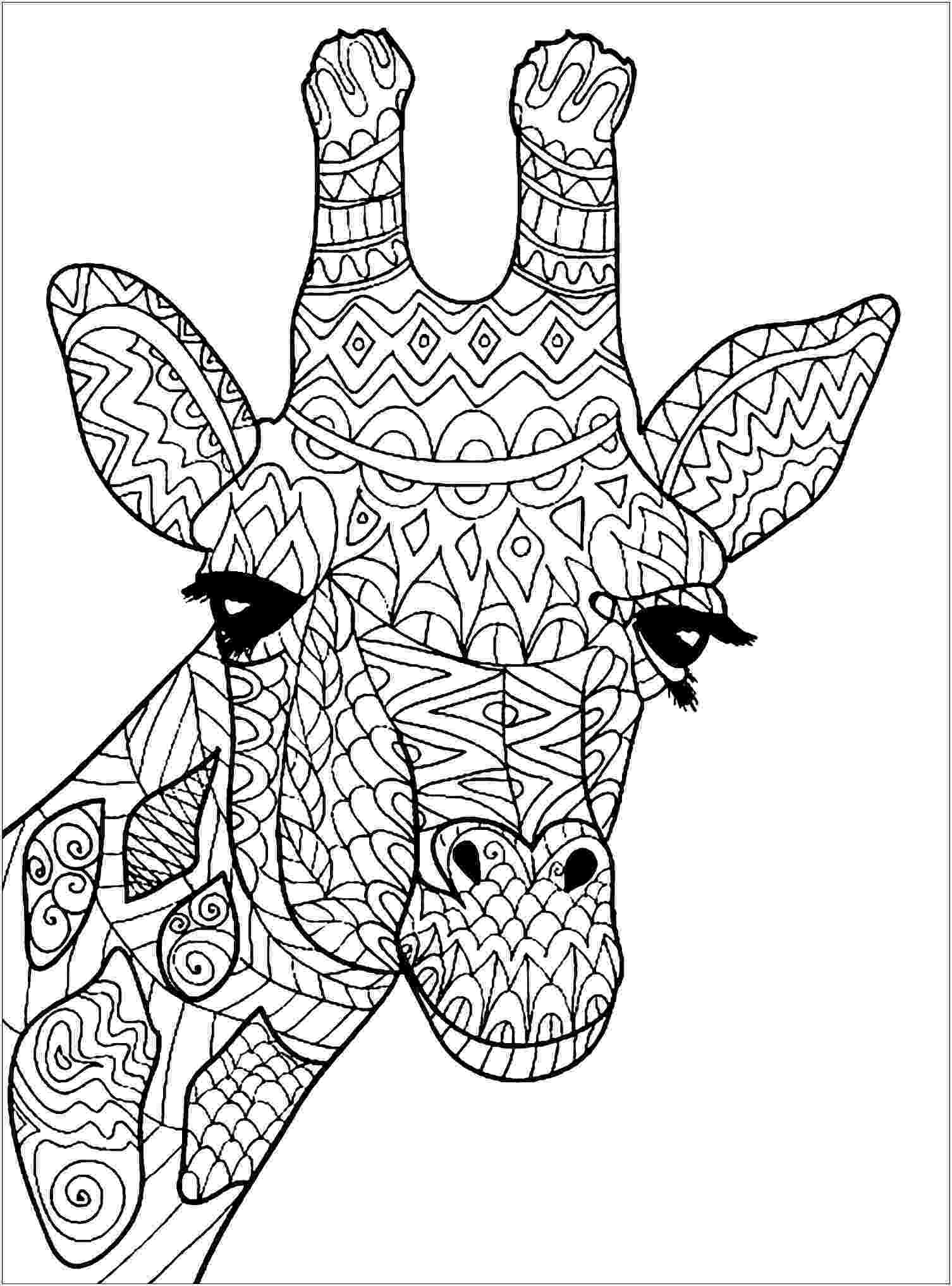 colouring pages for giraffe giraffe head giraffes adult coloring pages colouring pages for giraffe