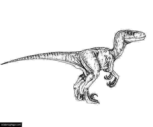 colouring pages velociraptor jurassic park velociraptor coloring page jurassic park colouring velociraptor pages