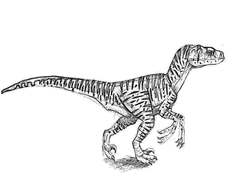colouring pages velociraptor raptor coloring pages download and print for free colouring pages velociraptor