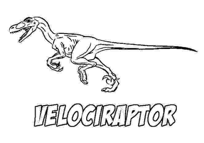 colouring pages velociraptor velociraptor coloring pages best coloring pages for kids velociraptor pages colouring