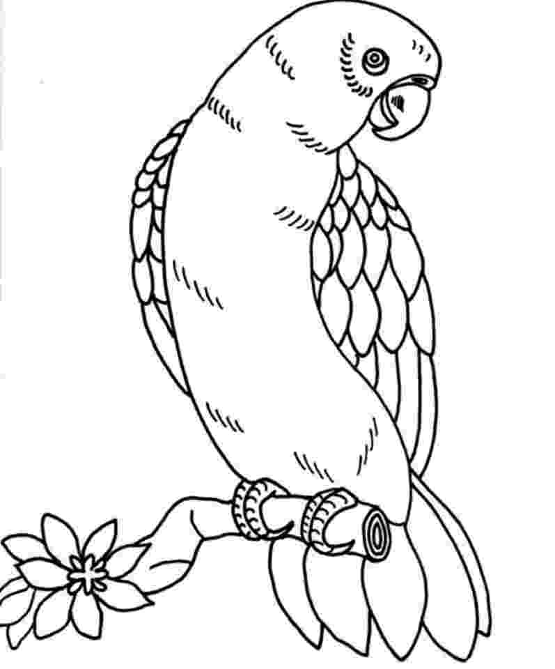 colouring picture bird 25 cute parrot coloring pages your toddler will love to color picture bird colouring