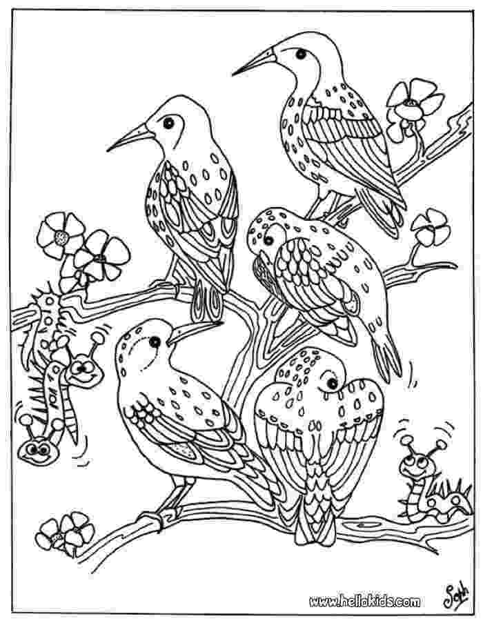 colouring picture bird bird group coloring pages hellokidscom bird picture colouring