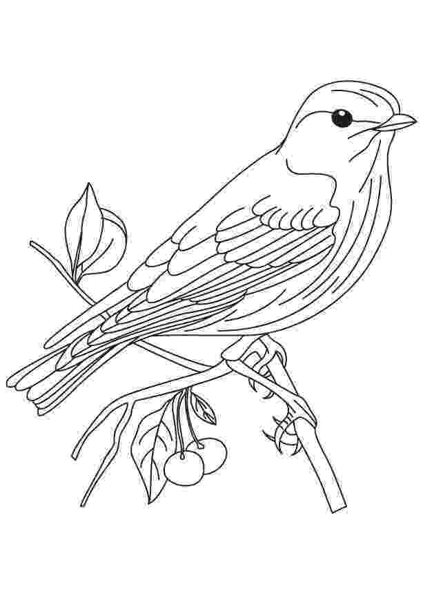 colouring picture bird birds coloring pages getcoloringpagescom bird colouring picture