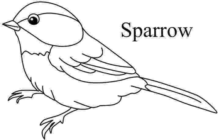 colouring picture bird different birds coloring pages coloring home colouring bird picture