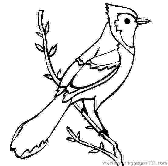 colouring picture bird mother baby bird coloring page pitara kids network picture colouring bird