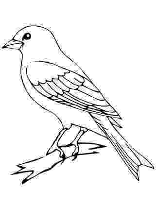 colouring picture bird waiting bird coloring page wecoloringpagecom picture colouring bird