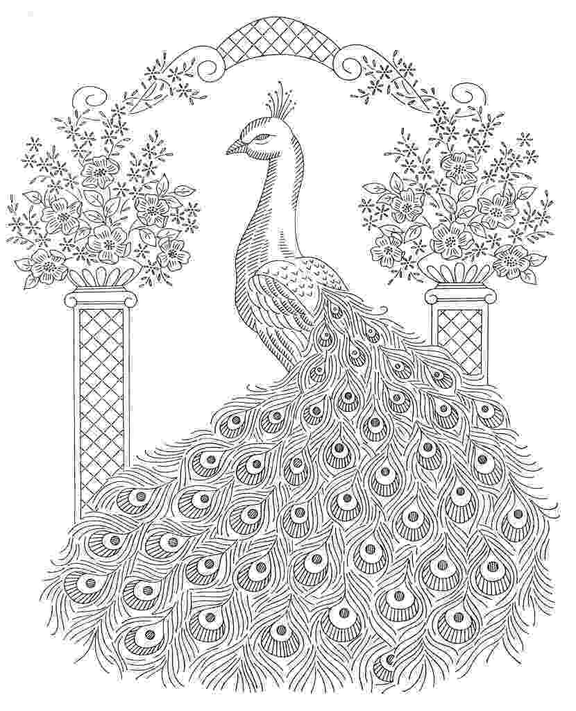 colouring picture of peacock peacock coloring page stock illustration download image colouring peacock picture of