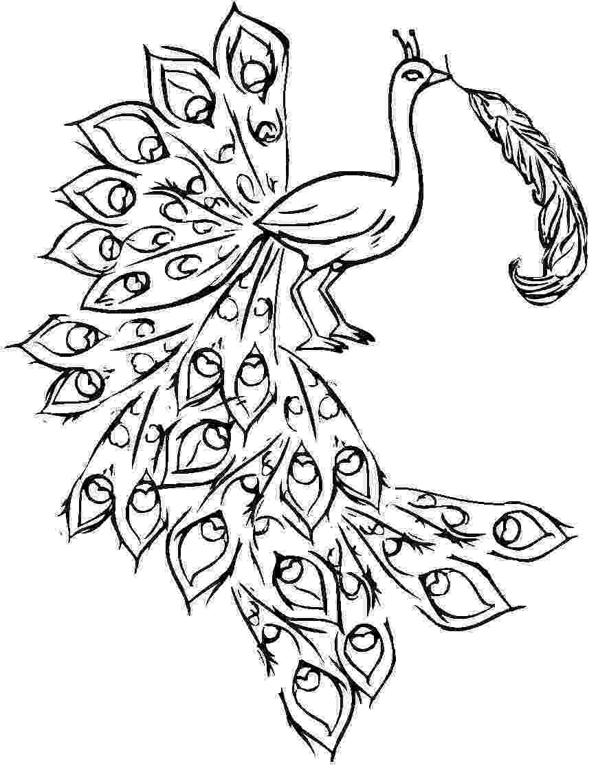 colouring picture of peacock peacock coloring pages colouring of picture peacock